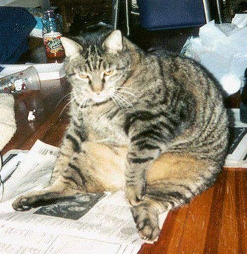 Grube koty #2 31
