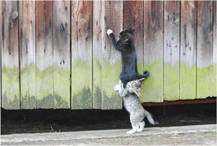 Słodkie kociaki 8