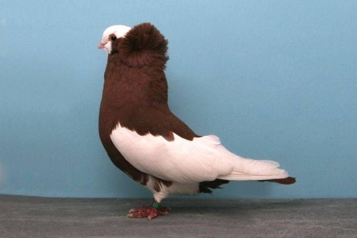 Nieco inne gołębie 7
