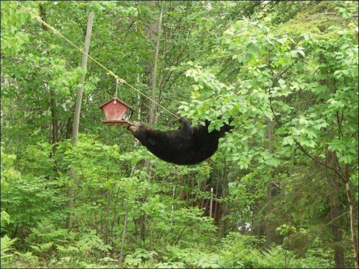 Niedźwiedzie #2 17