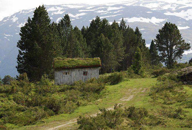 Zielone dachy w Norwegii #2 8