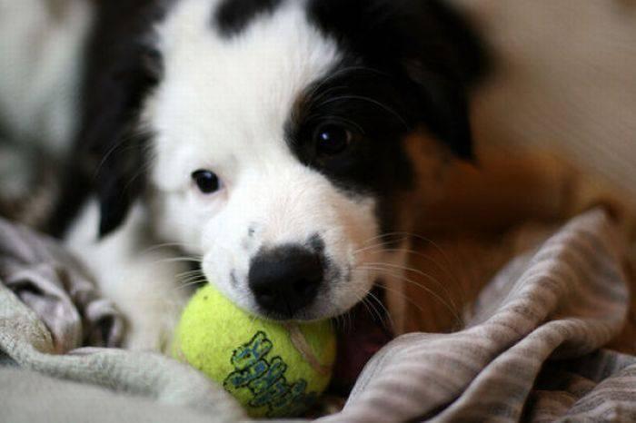 Ulubiona zabawka psów? 32