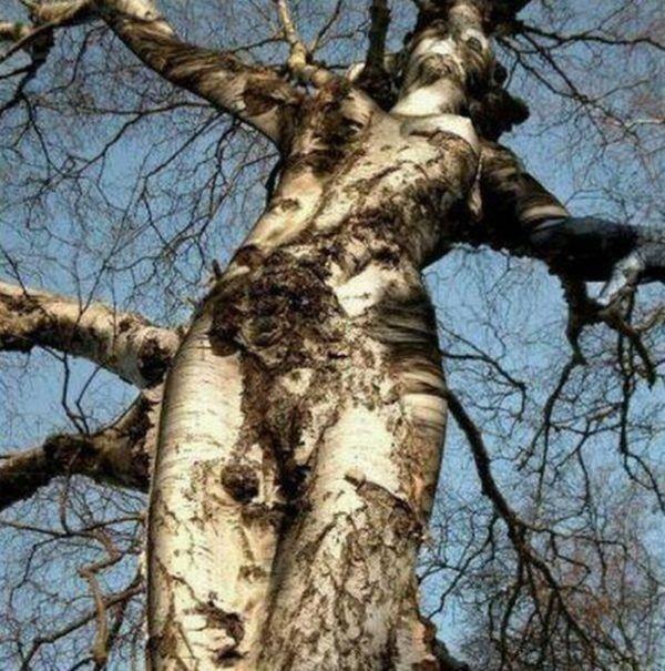 """""""Seksowne"""" drzewa 18"""