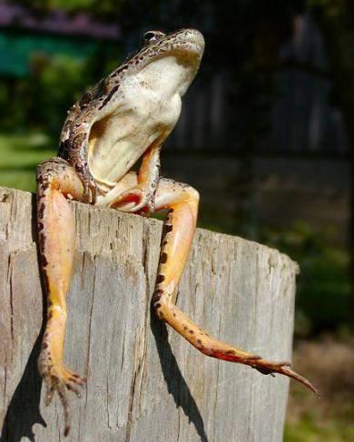 Śmieszne zdjęcia zwierząt #2 56