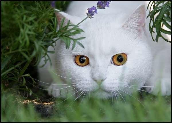 Koty 18