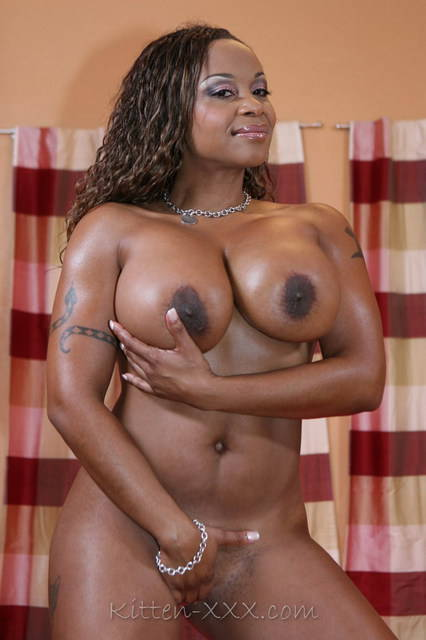 Kitten Adult Star 9