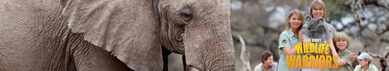 Steve Irwins Wildlife Warriors S01E14 HDTV XviD-AFG