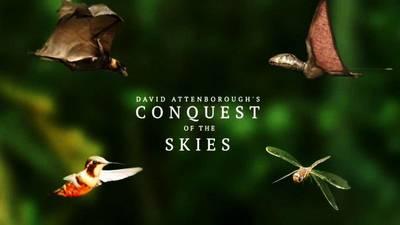 David Attenborough's Conquest Of The Skies S01E03 Triumph (2015) HDTV XviD-AFG