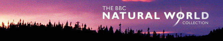 Natural.World.S35E04.Growing.Up.Wild.HDTV.x264-C4TV
