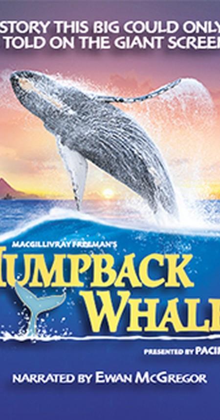 Humpback Whales 3D (2015) 1080p BluRay x264-GUACAMOLE