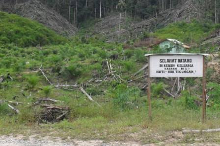 114344301030e98eb8aecfa5994157c44b1e6848 Bupati Madina Tidur: Pencuri Batumundom Dan Sikapas Jual Hutan Negara Laba Onas Ke Penadah Padangsidimpuan