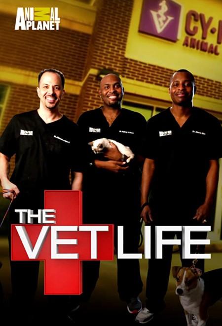 The Vet Life S06E00 Most Memorable Cases 480p x264-mSD