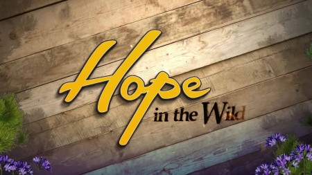 Hope in the Wild S02E21 From Orphaned Fawns to Freedom 480p x264-mSD