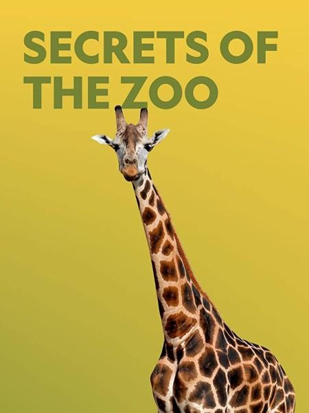 Secrets of the Zoo S03E10 Cheetah Play Date 720p WEB x264-CAFFEiNE